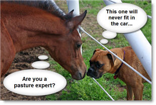 Dog and horse interviewing